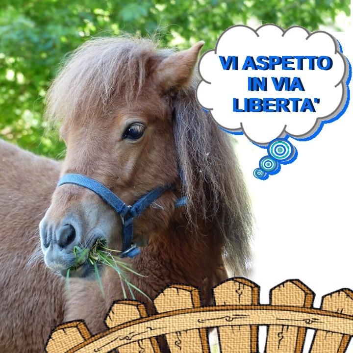 PONY IN LIBERTà5